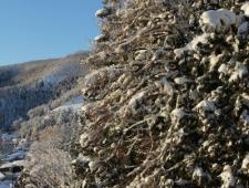 ski-lodge-nozawa-trees